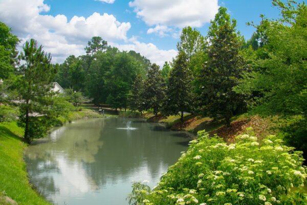 Pond - New